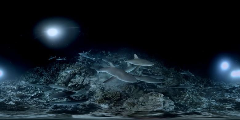 700 Sharks de Manuel Lefevre